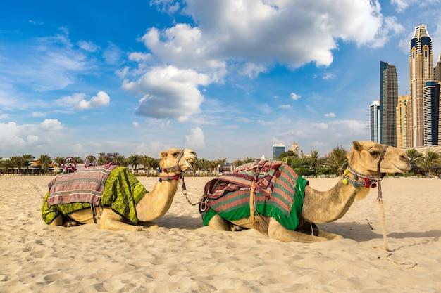 Верблюд в дубай марина, объединенные арабские эмираты