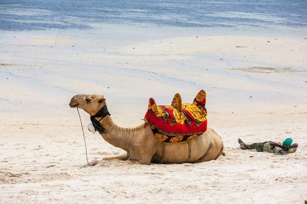 Верблюд лежит на песке на фоне океана и лодок
