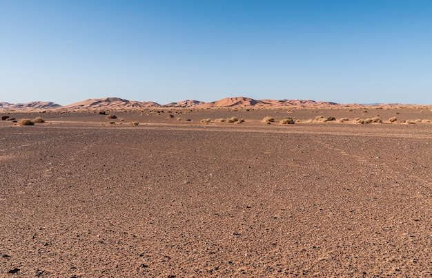 ラクダ、dromedariesおよびberebers、merzougaモロッコ