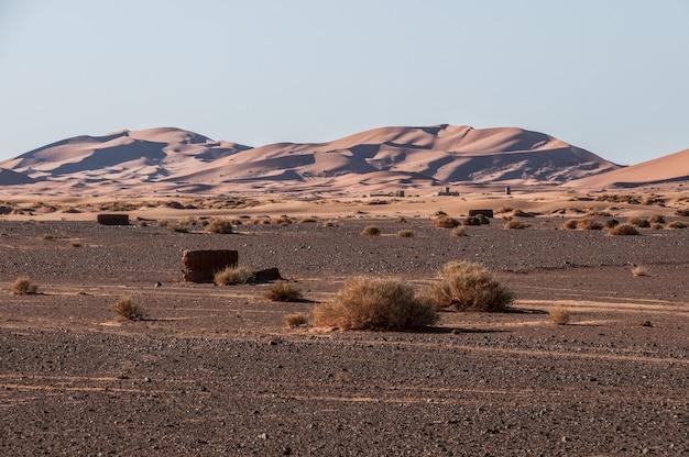 ラクダ、dromedariesおよびberebersモロッコ