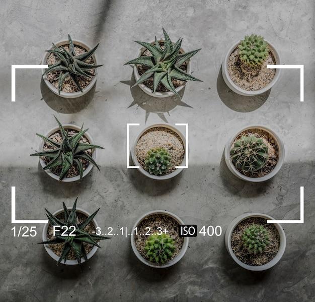 카메라 캡처 식물 스냅 샷 배너