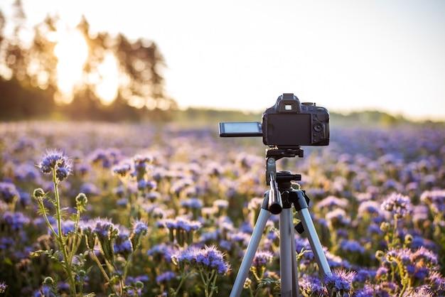 咲くファセリアの分野で三脚のカメラ