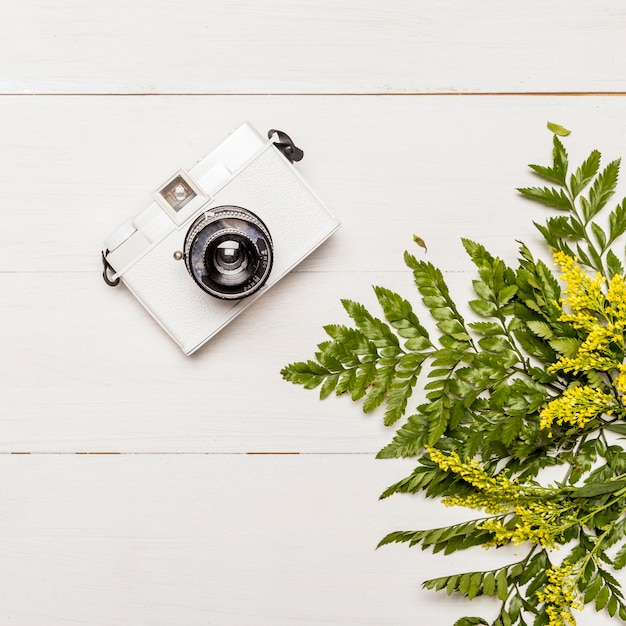 Camera and yellow flowers with green leaves
