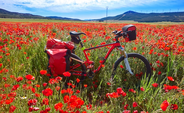 Camino de santiago in bicycle saint james
