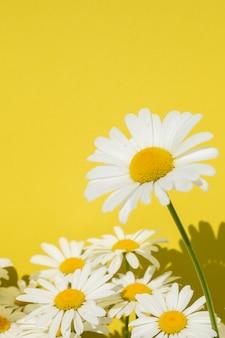 明るい黄色の背景にカモミールの花、テキストのコピースペース。