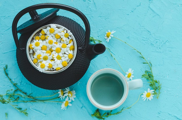Camomile flowers in a teapot on blue background