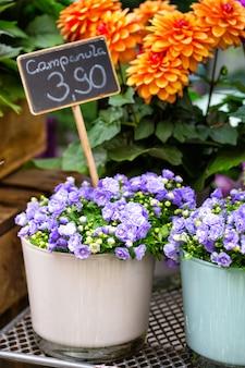 カンパニュラ、フラワーショップで花のショーケース
