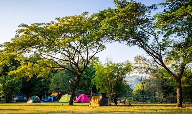 푸른 나무와 자연 공원에서 야영 및 텐트