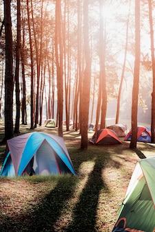 湖の近くの松林の下でのキャンプとテント。朝は美しい日差しが降り注ぐ。