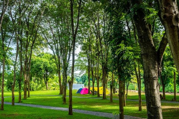 自然公園でのキャンプと木々のあるテント