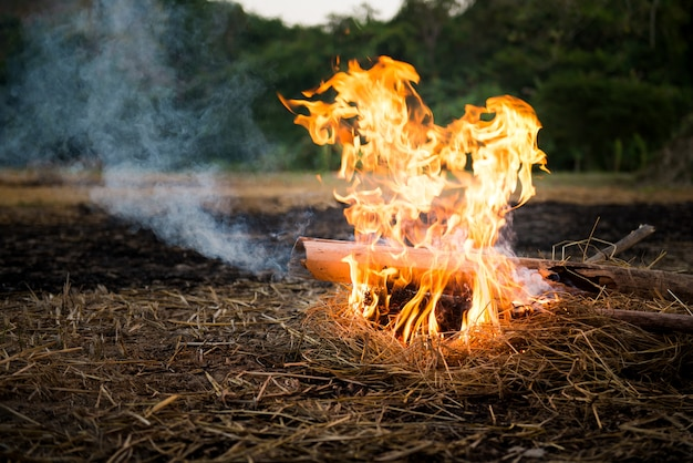 Camping fire on the ground using bamboo and straw as fuel.