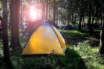Camping in Green Grass and Forest With Sunrise