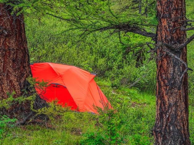 深い森でのキャンプ。針葉樹の山林にあるオレンジ色のテント。自然の中での平和とリラクゼーション。