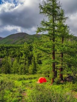 日当たりの良い山でのキャンプ。山の森の背の高い木の下にあるオレンジ色のテント。自然の中での平和とリラクゼーション。垂直方向のビュー。