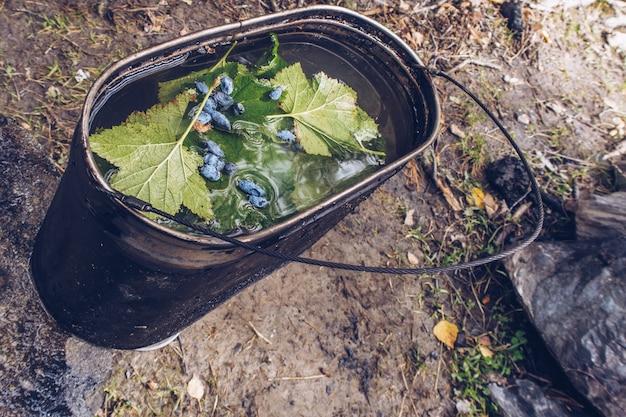 青いスイカズラの果実とスグリの葉とお茶とキャンプポット。ハーブティー本格的な夏の屋外キッチン。田舎での生活、トレッキングツアールーチン
