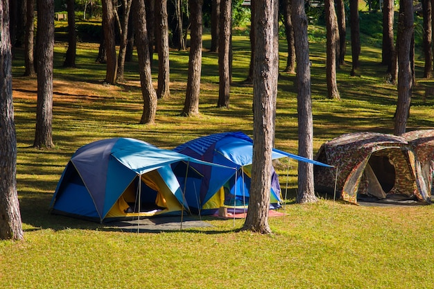 Camping and tent under the pine forest near water outdoor in morning at pangung