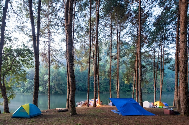 Camping tent in pine forest on reservoir in evening