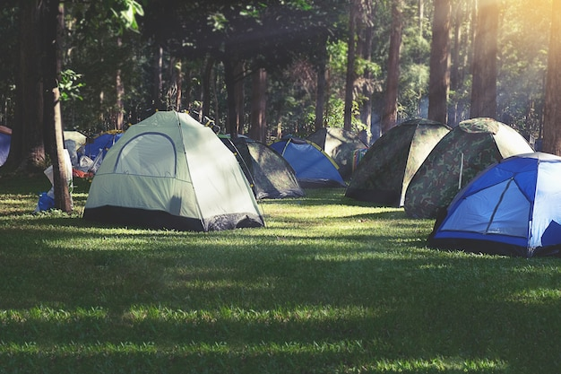 Camping with tents in the forest