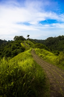 Campuhan ridge hiking trail in ubud, bali