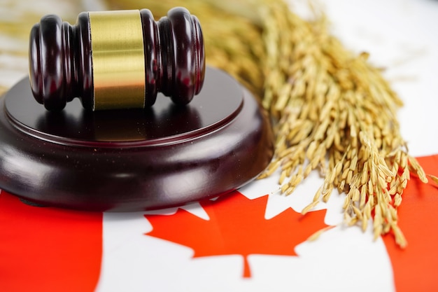 Canada flag and judge hammer with gold grain from agriculture farm.