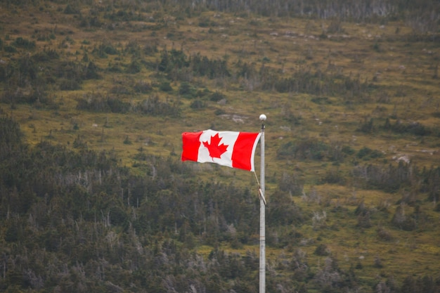 Canada flag with forest background
