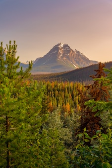 Canada forest landscape with big mountain in the background