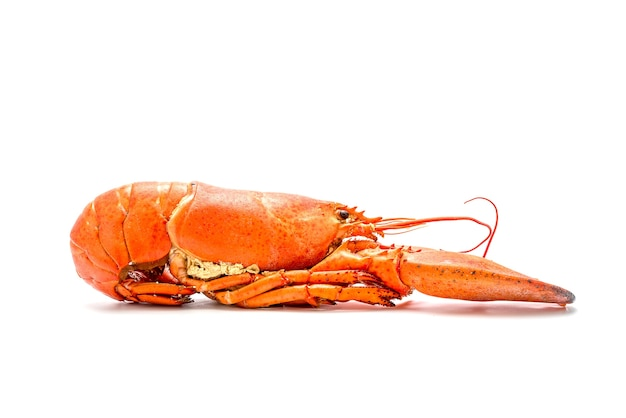 Canadian lobster on a white background.