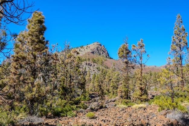 카나리아 섬 자연 공원 스페인. 나무와 산으로가는 길.
