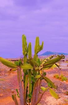 カナリア諸島。旅行気分。位置