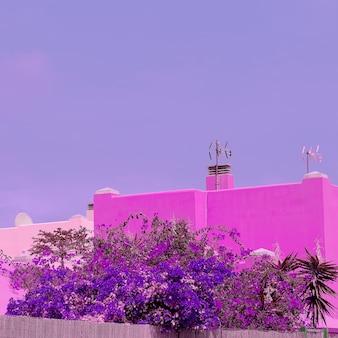 카나리아 섬. 열 대 꽃입니다. 자연 애호가 개념입니다. 보라색 바이브