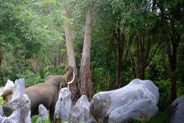 タイのジャングルの象の魅力的な写真