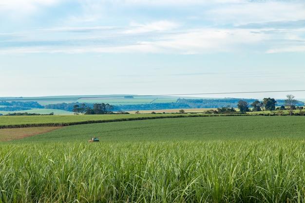 Cane sugar field, pradopolis. sao paulo countryside state