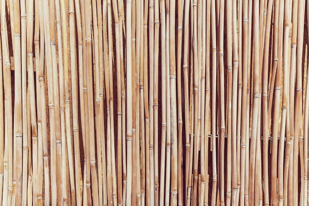 Cane texture, the fence of the stalks of cane