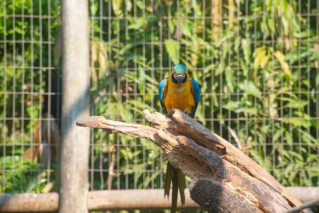 Caninde macaw, 브라질의 재활 센터에서 자연으로 돌아가기 전에 아름다운 잉꼬. 자연광, 선택적 초점.