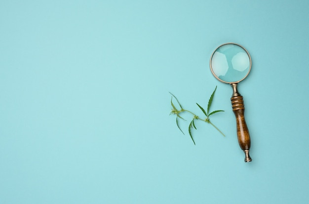 Cannabis branch with green leaves and wooden magnifier on blue background, alternative medicine, flat lay