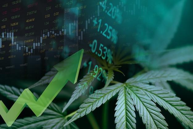 Торговля марихуаной на рынке каннабиса, графики акций, графики, тенденции роста прибыли от торговли каннабисом