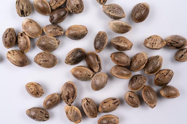Семена конопли крупным планом, макросъемка на белом фоне, вид сверху семена конопли макроса