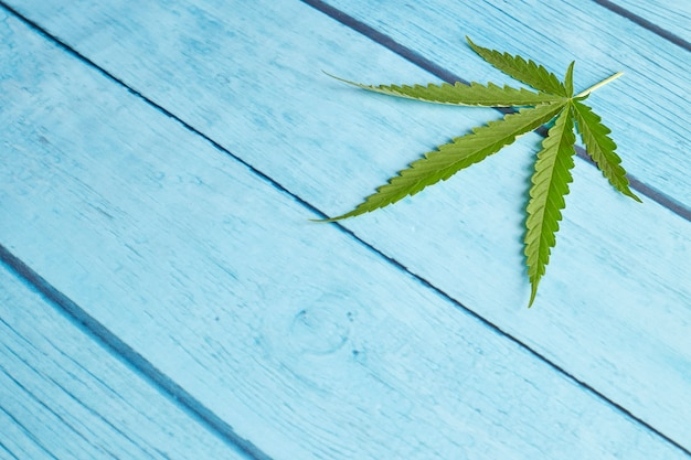 Cannabis leaf on bright blue wood