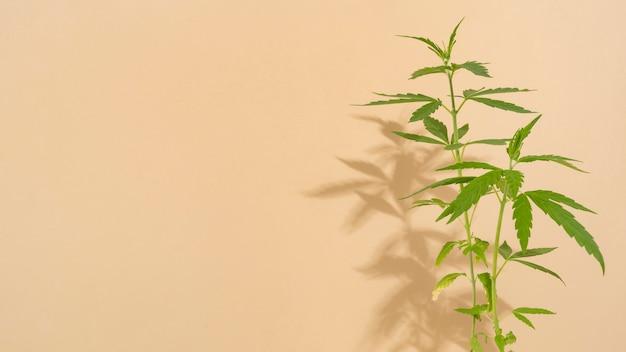 Primo piano della composizione nella foglia della cannabis