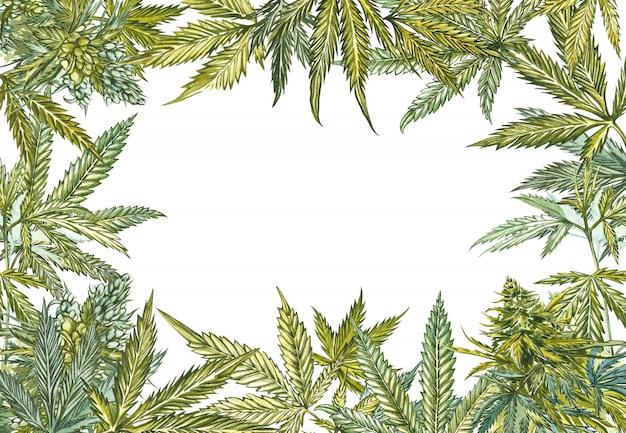 Cannabis leaves frame