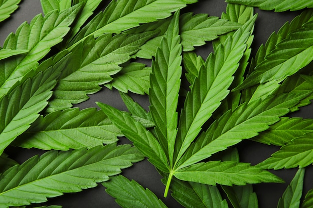 Cannabis leaves on a gray table