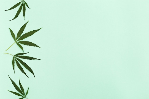 Cannabis leaves on light green paper background. green natural ingredients for cosmetic products. top view.  copy space.