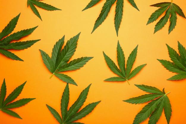 Cannabis leaves, marijuana leaves on orange