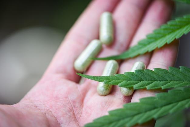 Cannabis leaves marijuana plant in hand and capsule hemp leaf