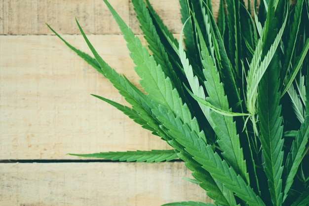 Cannabis leaves marijuana plant on wooden hemp leaf for extract medical healthcare natural