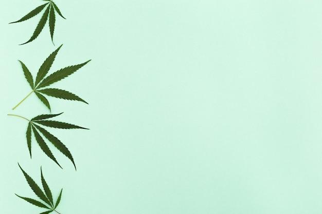 대마초는 밝은 녹색 종이 배경에 나뭇잎. 화장품을위한 녹색 천연 성분. 평면도. 공간을 복사하십시오.
