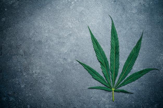 Cannabis (marijuana) leaves on a dark