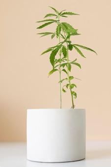 大麻植物の葉の配置