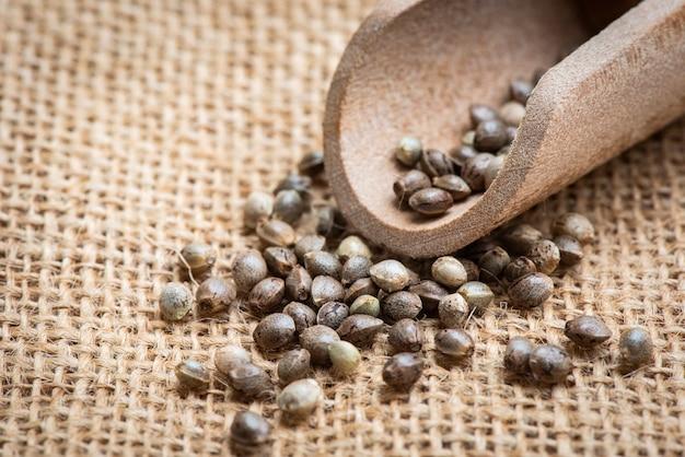 흰색 배경에 대마초 씨앗, 약초, 마리화나 씨앗에 대한 대마 씨앗 닫습니다
