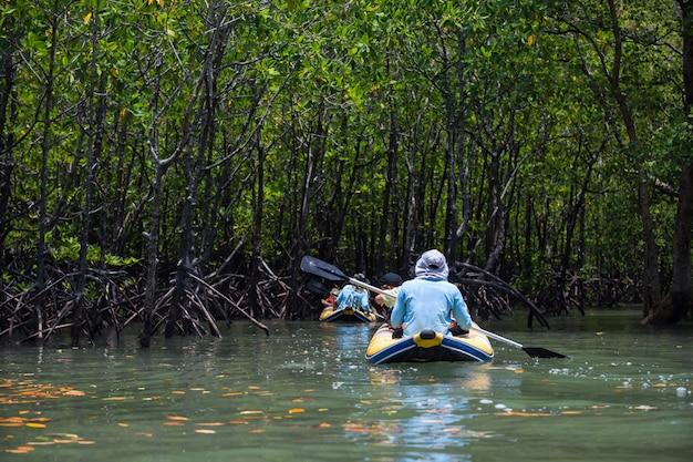 Canoe to mangrove swamp, phang nga